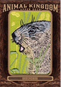 2013 Goodwin Champions box 1 Groundhog Animal Patch