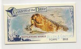 2012 Ginter mini Giants Deep Bottlenose Whale